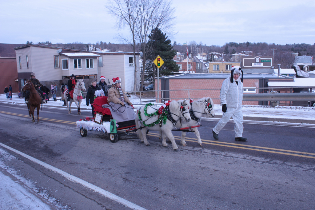 Miniature horses in the Eganville Christmas parade